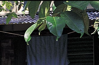 Insect Protection Sheets