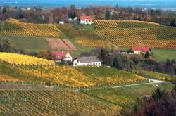 Weinbau & Gästezimmer Liener