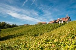 Weingut Pongratz Wein vom Kranachberg